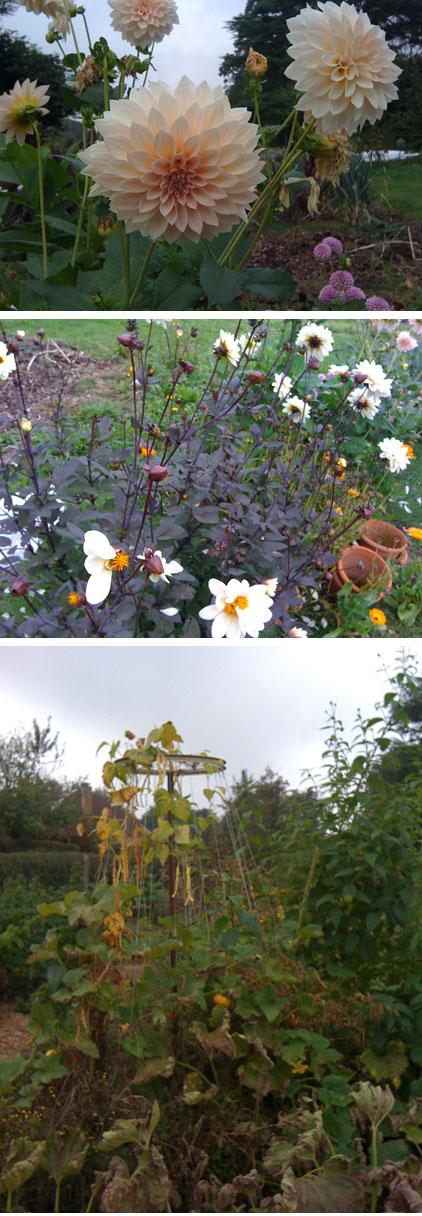 jardin_sandra_2